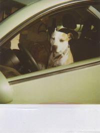 Molly_Car