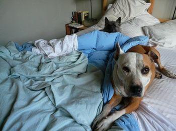 Molly thomas bed n1018302121_236984_9061