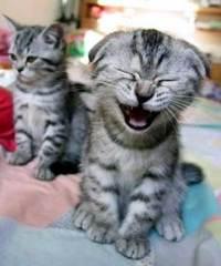 Laughingkitten