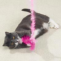 Cattoy_1