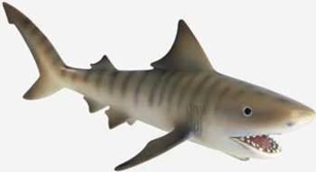Shark_1455520tiger20shark